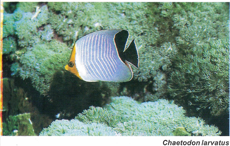 Tatlısu balığı - türler, alışkanlıklar, yaşam alanları
